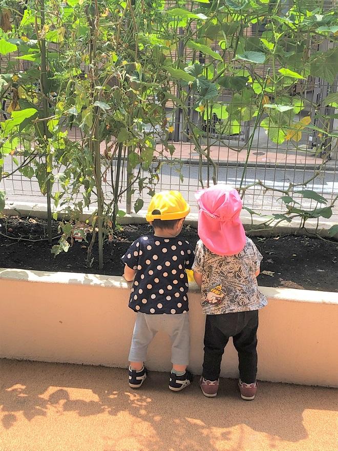 園庭写真(菜園)